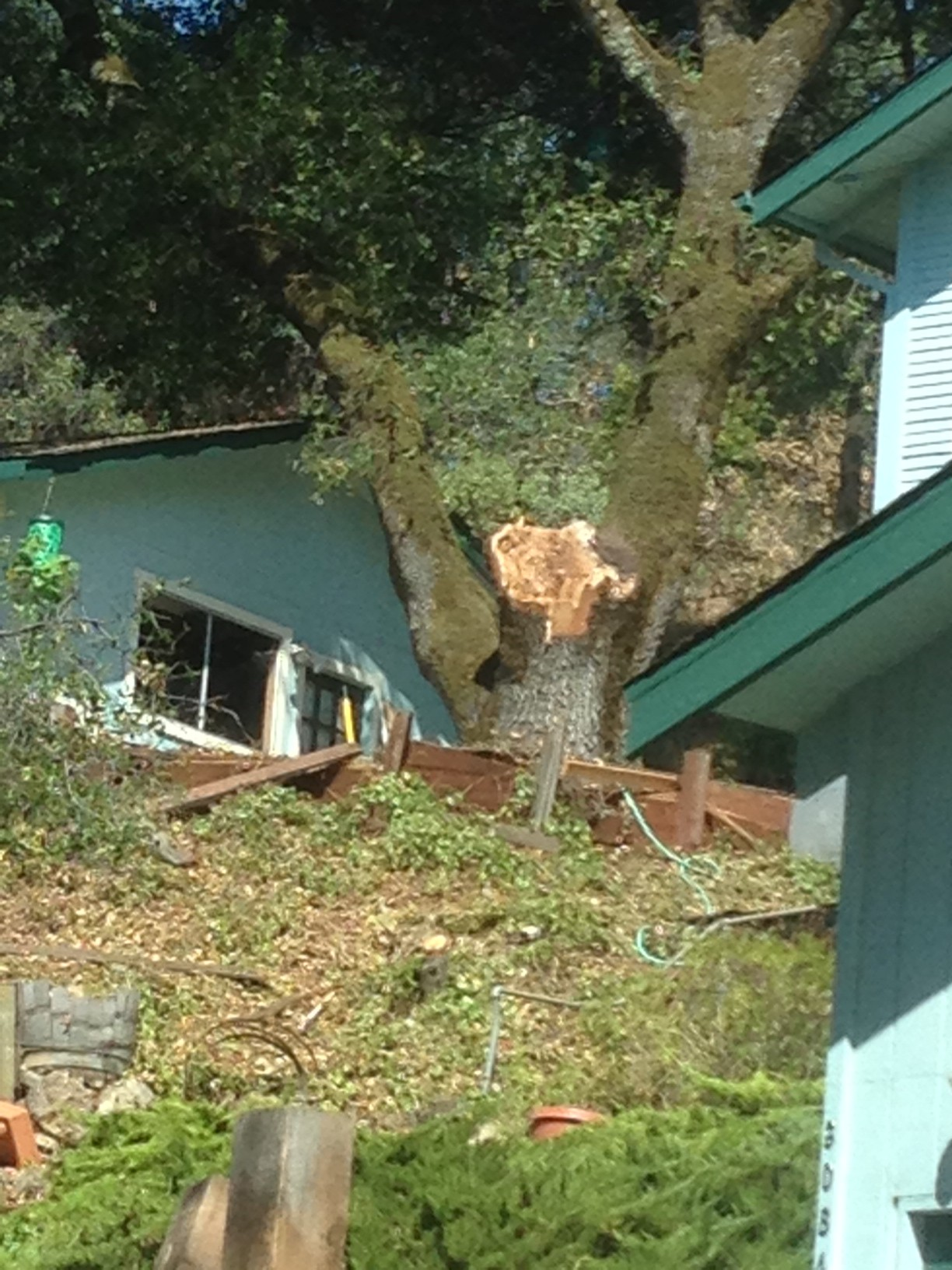Tree limb fall